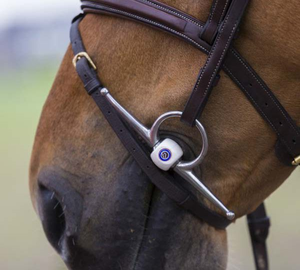 How to find the right bit size for your horse?